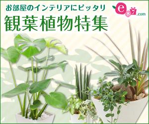 イイハナ・ドットコム(観葉植物特集)